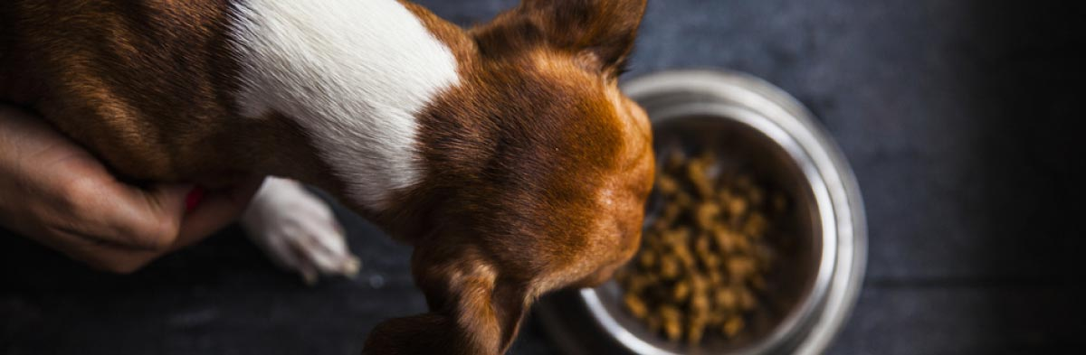 dog food faq